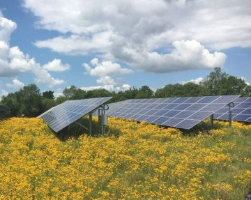 Solar array at school recognized as pollinator-friendly