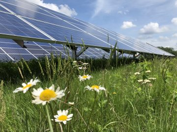 Solar Power Site Aims to Save Endangered Bees, Butterflies
